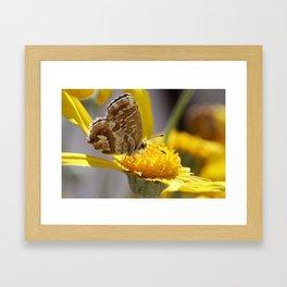 Furry Wings Framed Art Print