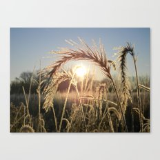 Wheat Sunrise Canvas Print