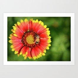 Bee looking for honey in Spring Art Print