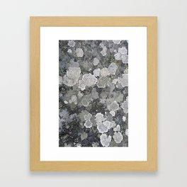 Buzy, Buzy Lichen Framed Art Print