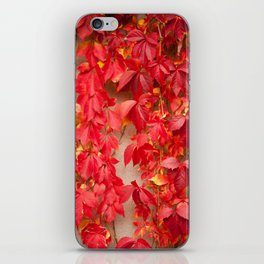 Vitaceae ivy wall abstract iPhone Skin