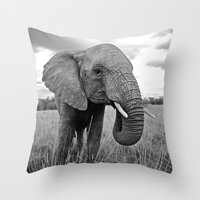 south africa Throw Pillows featuring African Elephant, South Africa by Shannon Wild