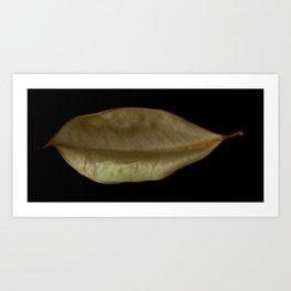 'Magnolia Leaf' Art Print