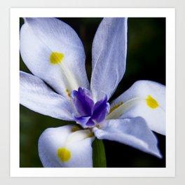white lily I Art Print