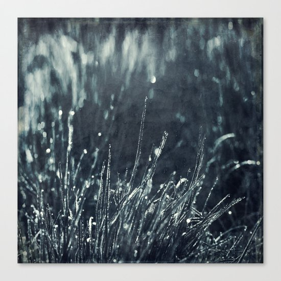 Pearly Dew Drops Canvas Print