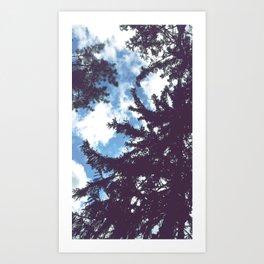 sky & pine Art Print