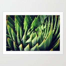 Pokey Succulent Art Print