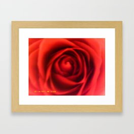Close Up Rose Framed Art Print