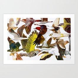 Bird of North America Art Print