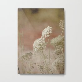 Along a Country Road -- Queen Anne's Lace Wildflowers Metal Print