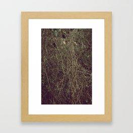 Tangled II Framed Art Print