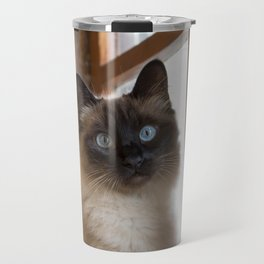 Adorable siamese cat with perfectly round blue eyes looking surprised, next to rustic wooden window. Travel Mug