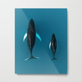 Humpback whale mother and child in the arctic Ocean Metal Print