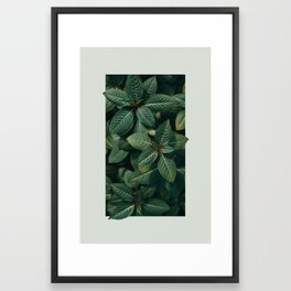 Growth III Framed Art Print