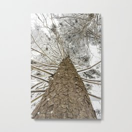 Snowy trees from bellow Metal Print