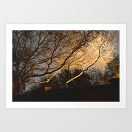 Low Exposure Street Light Illumination Art Print