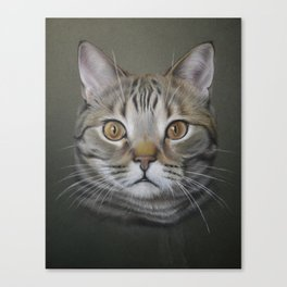 British shorthair cat Canvas Print