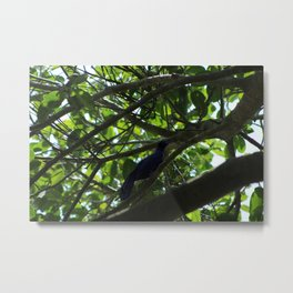 Great Tailed Grackle near Tulum Metal Print