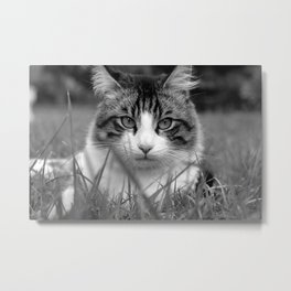 like a lion Metal Print