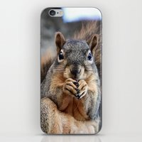 death cab for cutie iPhone & iPod Skins featuring Cutie! by IowaShots