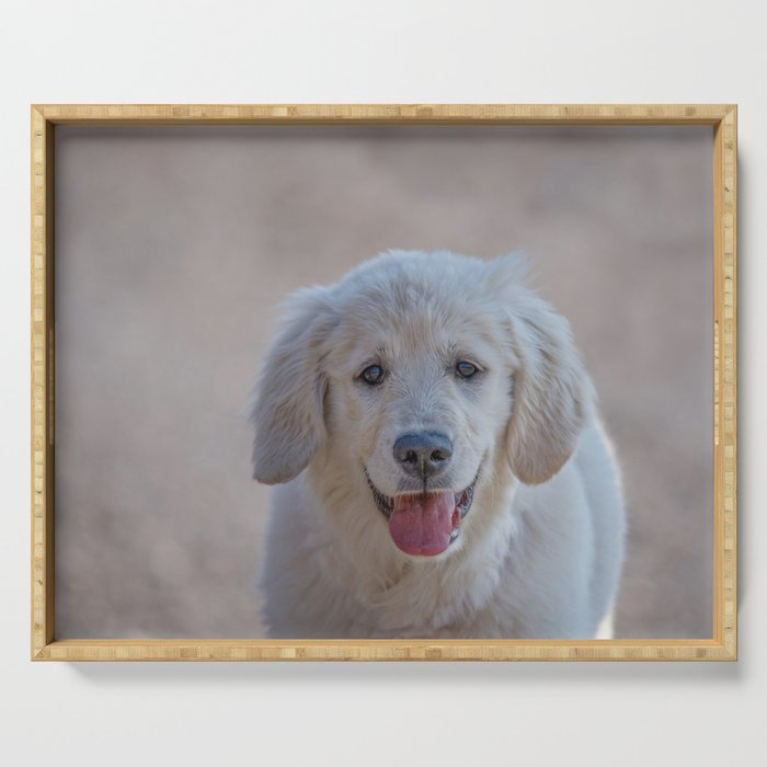 Young Golden Retriever breed dog with light fur stares into your eyes Serving Tray