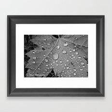 Drops of Life Framed Art Print