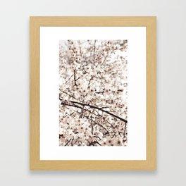 Light Blossoms Framed Art Print