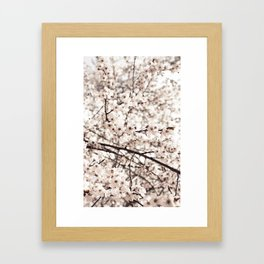 Light Blossoms Framed Art Print
