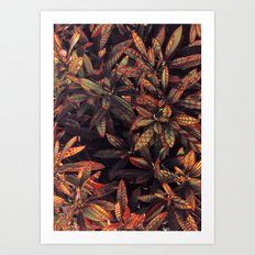 leaves evolved 5 Art Print