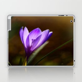 Bright Purple Spring Crocus Laptop & iPad Skin