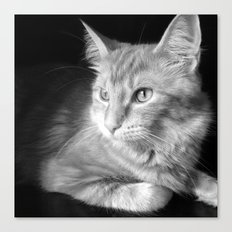 Classic Cat Clementine  Canvas Print