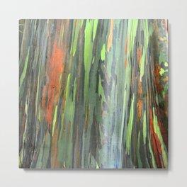 Eucalyptus Tree Honolulu Hawaii  Metal Print