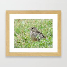 Pipit on the Lawn Framed Art Print
