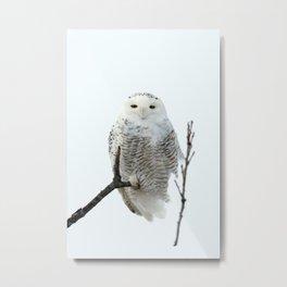Snowy in the Wind (Snowy Owl) Metal Print