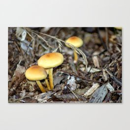 Concept nature : The unkown mushrooms Canvas Print
