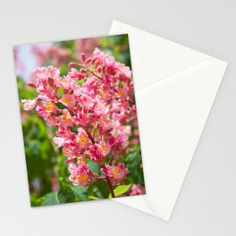 Aesculus red blossom cluster Stationery Cards