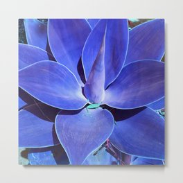 Turquoise and Teal Exotic Succulent Metal Print