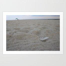 Beach Bird Feather Art Print