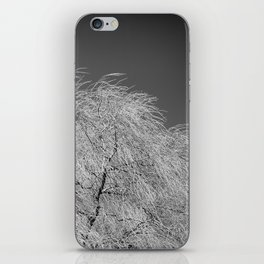 Spring Breeze, Port Hope, Ontario iPhone Skin