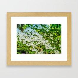 White Trillium grandiflorum Framed Art Print