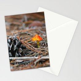 Hammock Hills Mushroom 2014 Stationery Cards