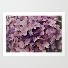 Purple Orchid flower Art Print