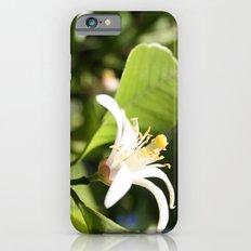 Lemon flower iPhone 6s Slim Case