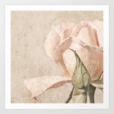 Vintage Pale Pink Rose Art Print