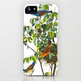 Blue Grosbeak Bird iPhone Case