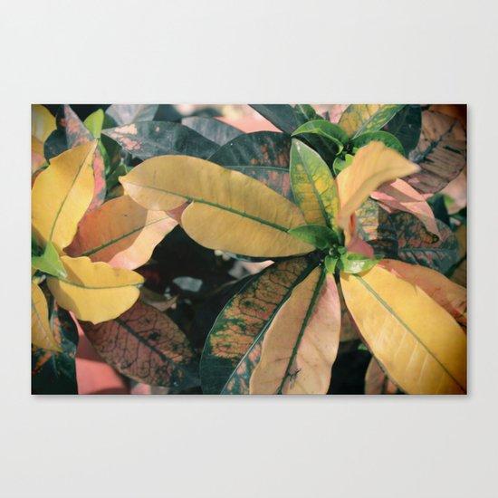 planta Canvas Print