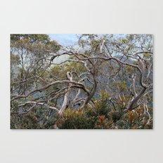 Australiana No. 1 Canvas Print
