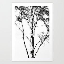 Silver Birch In Winter Art Print