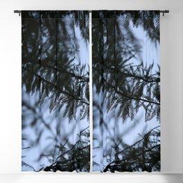bald cypress 01 Blackout Curtain