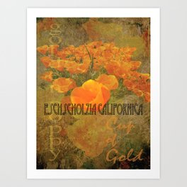 Cup of Gold - The California Poppy Art Print